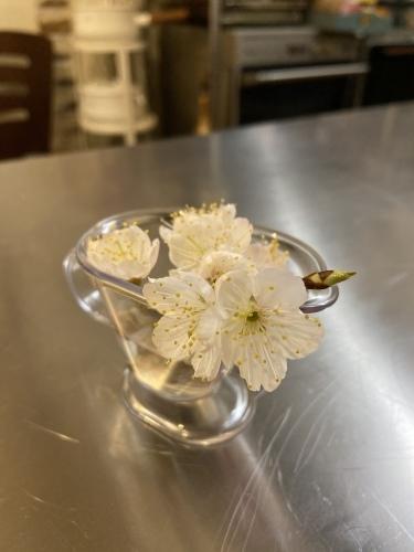弥生の料理クラス   こんな時こそ   桜が満開  _b0346442_11383929.jpeg