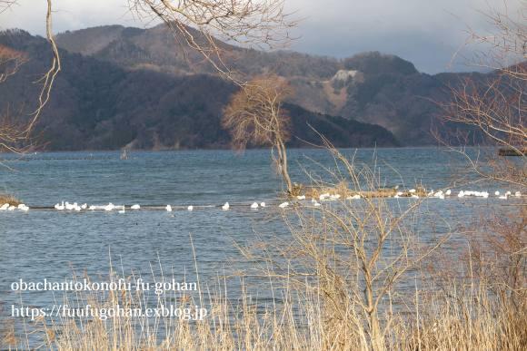 おとなのひな祭り御膳&琵琶湖散歩_c0326245_11102530.jpg