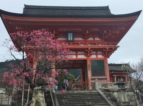 京都・奈良 冬の旅\'20 その3_e0326953_21285607.jpg