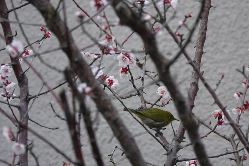 野鳥43_a0331055_16375310.jpg