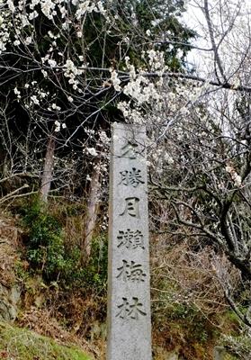 月ヶ瀬の梅♪_b0194861_11274755.jpg