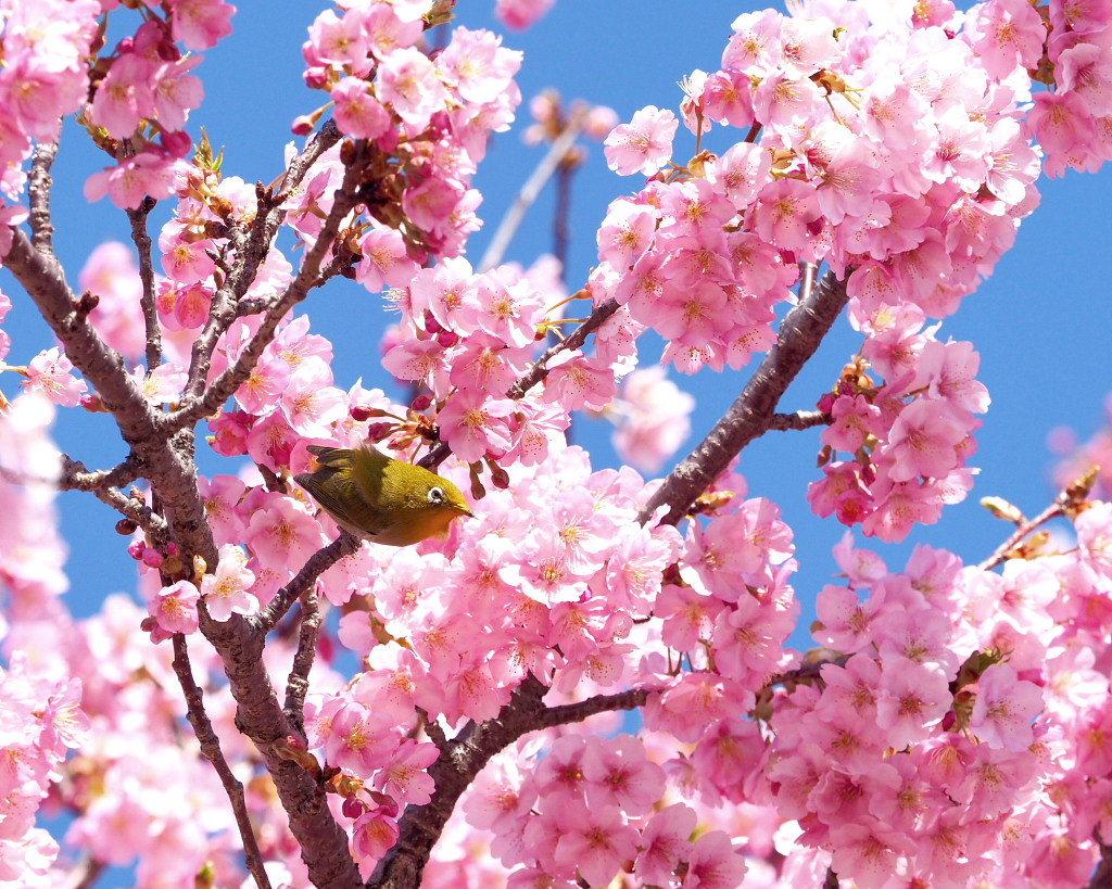 桜咲く 🌸いせさき市民のもり公園で🌸_c0305565_17424059.jpg