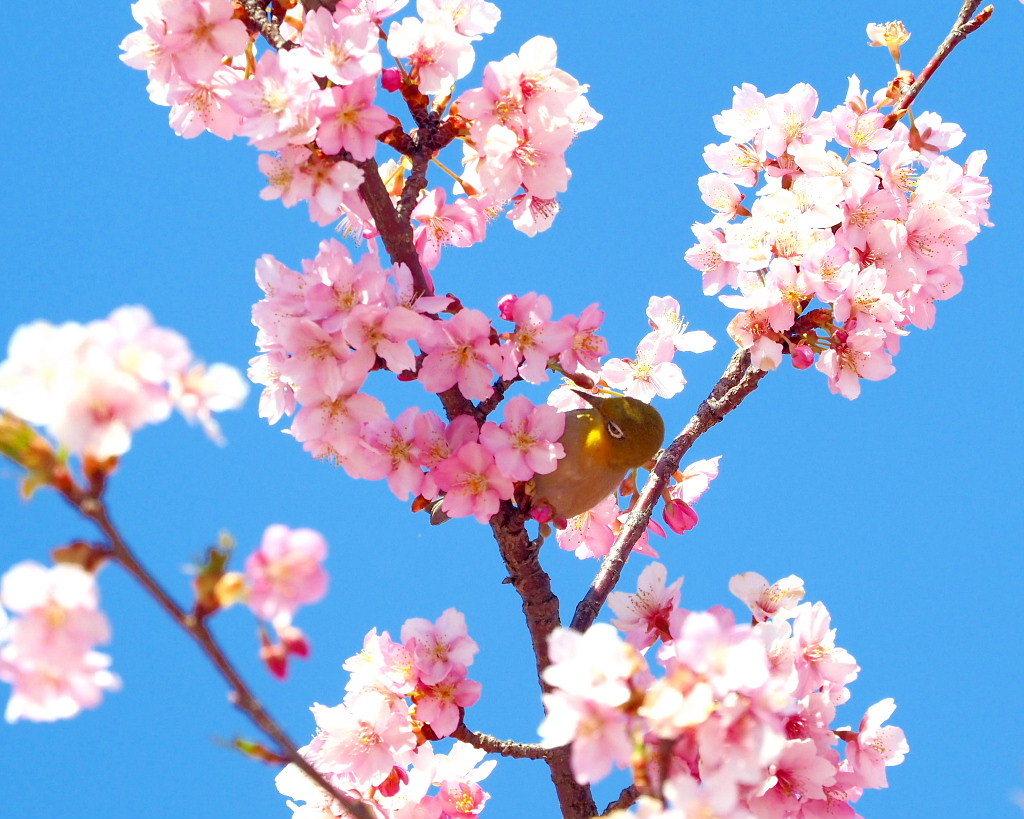 桜咲く 🌸いせさき市民のもり公園で🌸_c0305565_17425410.jpg