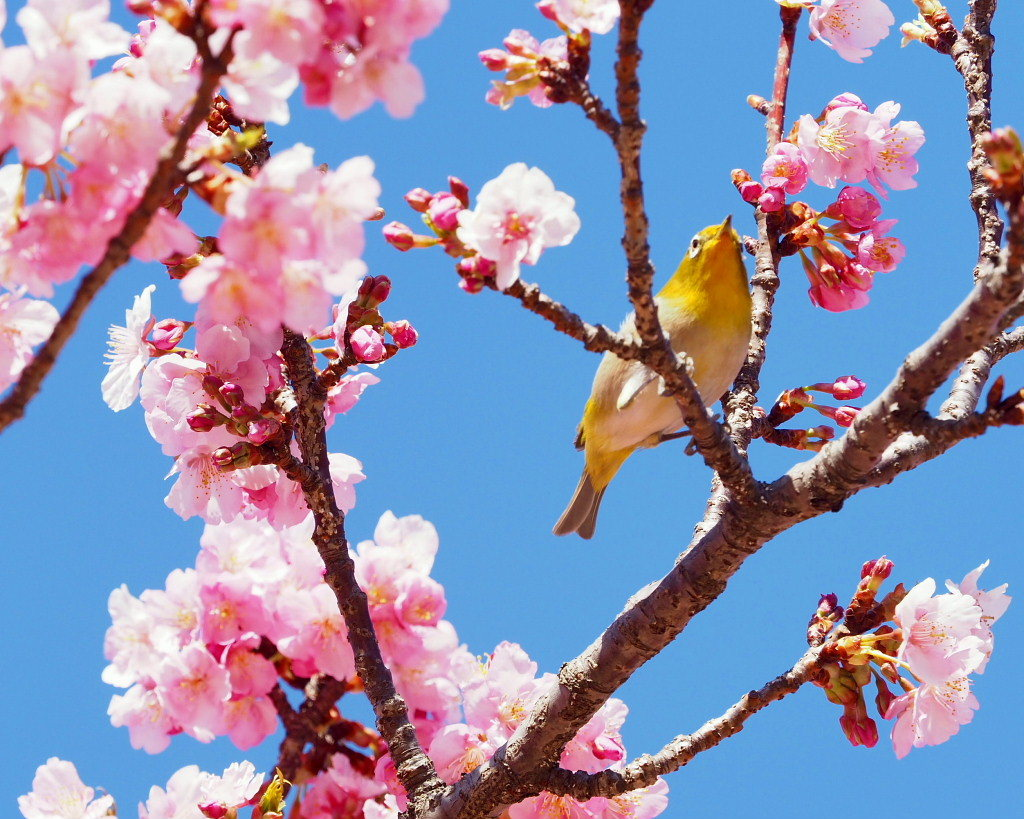 桜咲く 🌸いせさき市民のもり公園で🌸_c0305565_17432993.jpg
