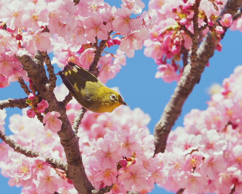 桜咲く 🌸いせさき市民のもり公園で🌸_c0305565_17435831.jpg