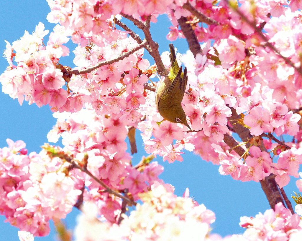 桜咲く 🌸いせさき市民のもり公園で🌸_c0305565_17442432.jpg