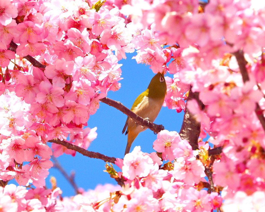 桜咲く 🌸いせさき市民のもり公園で🌸_c0305565_17443695.jpg