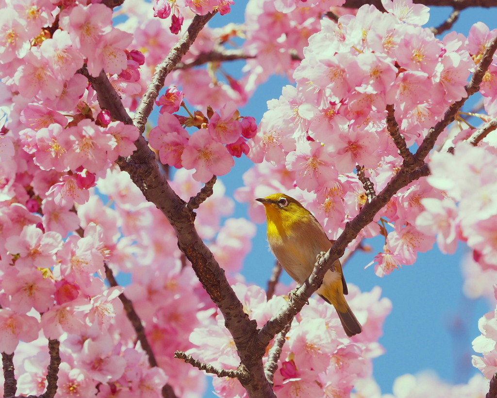 桜咲く 🌸いせさき市民のもり公園で🌸_c0305565_17451060.jpg