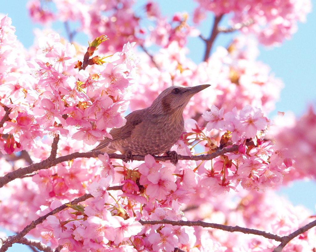 桜咲く 🌸いせさき市民のもり公園で🌸_c0305565_17453781.jpg