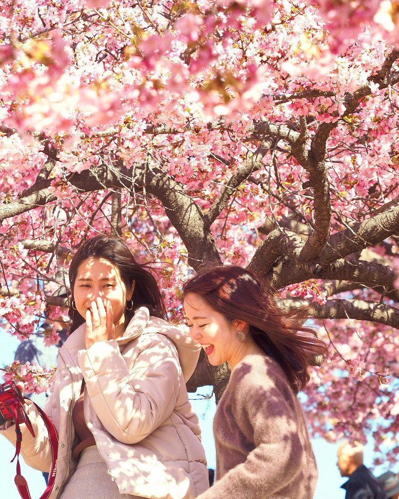 桜咲く 🌸いせさき市民のもり公園で🌸_c0305565_17462937.jpg