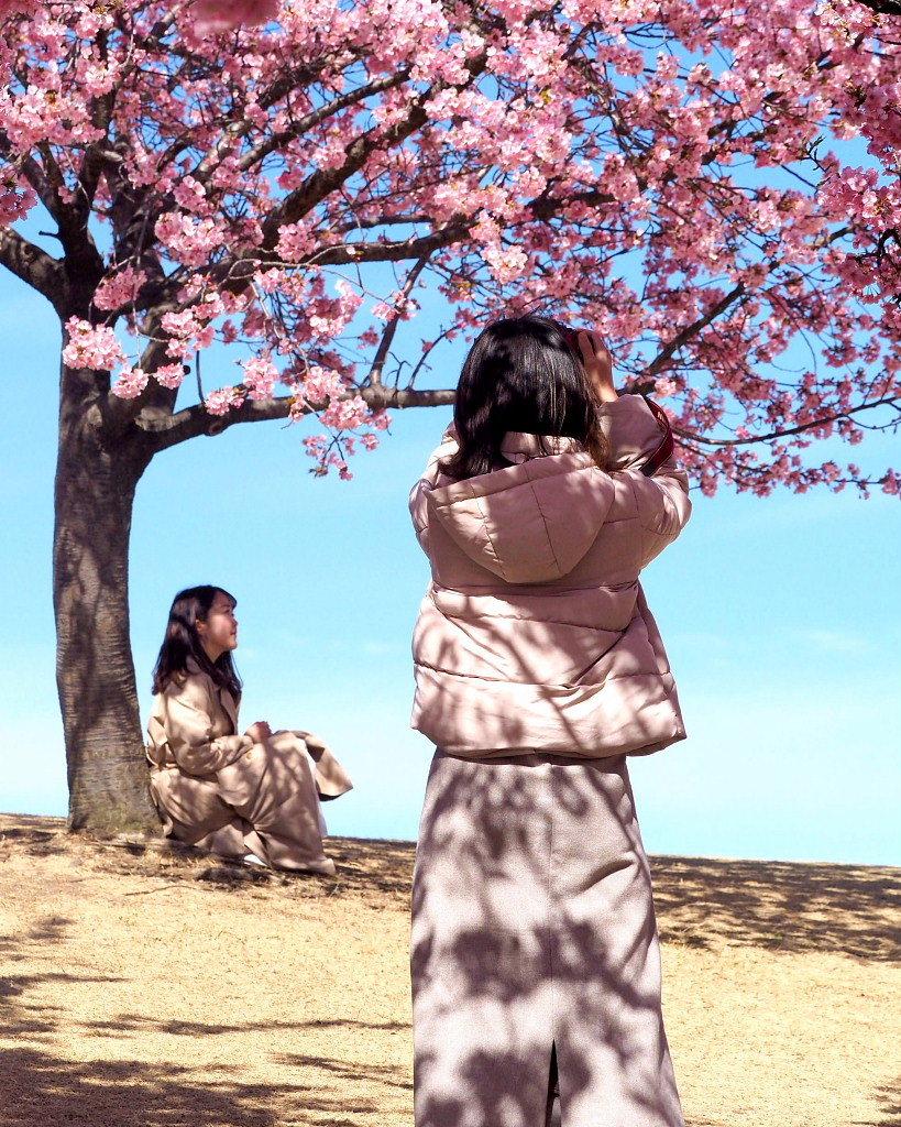 桜咲く 🌸いせさき市民のもり公園で🌸_c0305565_17464298.jpg