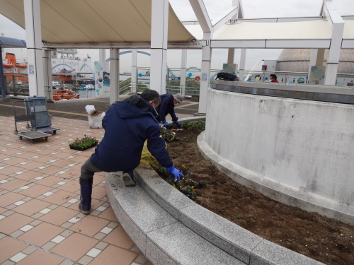 名古屋港水族館前花壇の植栽R2.3.4_d0338682_12592612.jpg