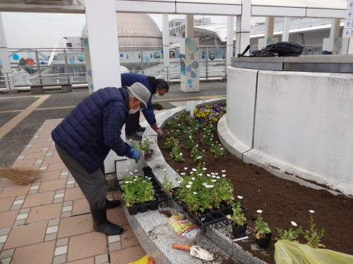 名古屋港水族館前花壇の植栽R2.3.4_d0338682_12593663.jpg