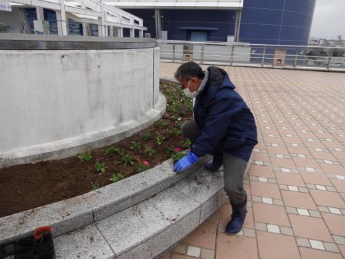 名古屋港水族館前花壇の植栽R2.3.4_d0338682_12594875.jpg