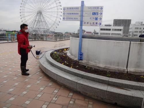 名古屋港水族館前花壇の植栽R2.3.4_d0338682_13000378.jpg
