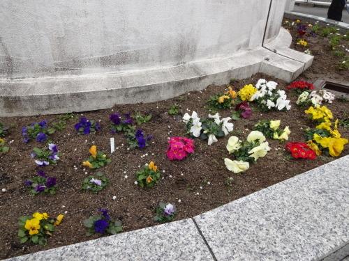 名古屋港水族館前花壇の植栽R2.3.4_d0338682_13021228.jpg