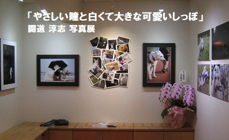 「やさしい瞳と白くて大きな可愛いしっぽ」開道 淳志 写真展 その2_e0134502_18553241.jpg