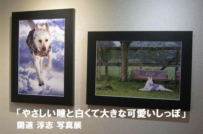 「やさしい瞳と白くて大きな可愛いしっぽ」開道 淳志 写真展 その2_e0134502_18560711.jpg