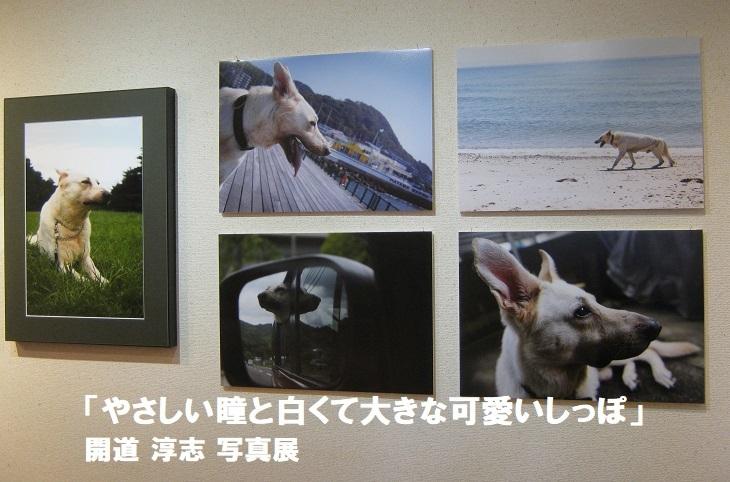 「やさしい瞳と白くて大きな可愛いしっぽ」開道 淳志 写真展 その2_e0134502_18561615.jpg