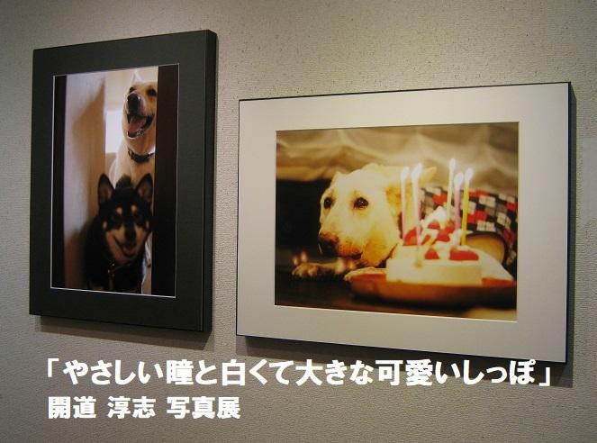 「やさしい瞳と白くて大きな可愛いしっぽ」開道 淳志 写真展 その2_e0134502_18564195.jpg