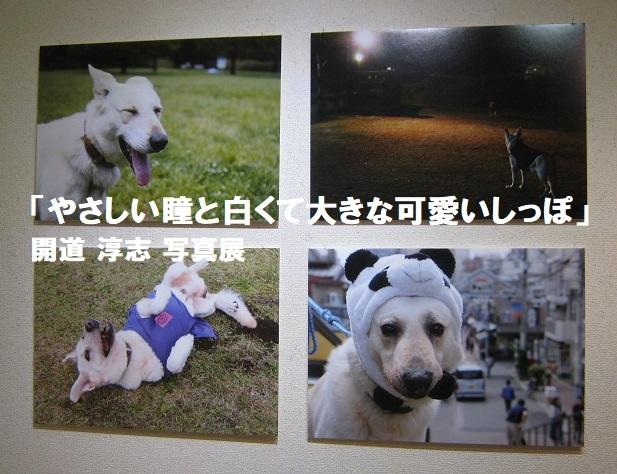 「やさしい瞳と白くて大きな可愛いしっぽ」開道 淳志 写真展 その2_e0134502_19002414.jpg