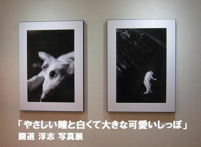 「やさしい瞳と白くて大きな可愛いしっぽ」開道 淳志 写真展 その2_e0134502_19003709.jpg
