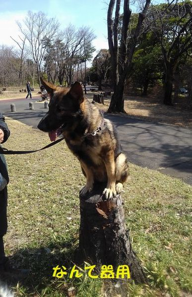 犬もはりあえば木にのぼる_d0224111_10412553.jpg