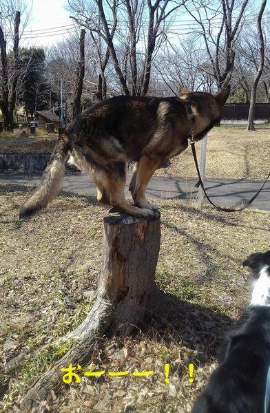 犬もはりあえば木にのぼる_d0224111_10421361.jpg