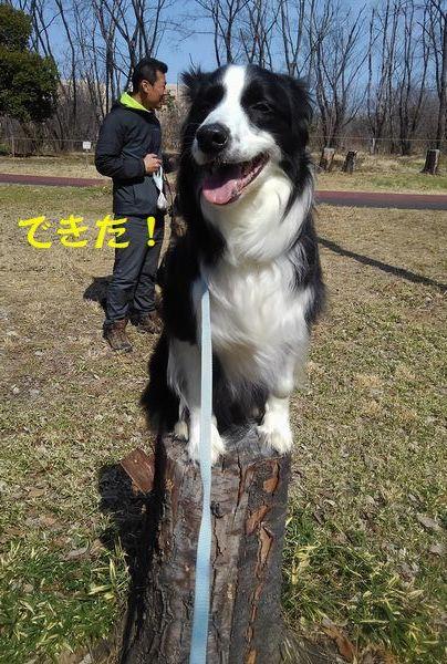 犬もはりあえば木にのぼる_d0224111_10445166.jpg