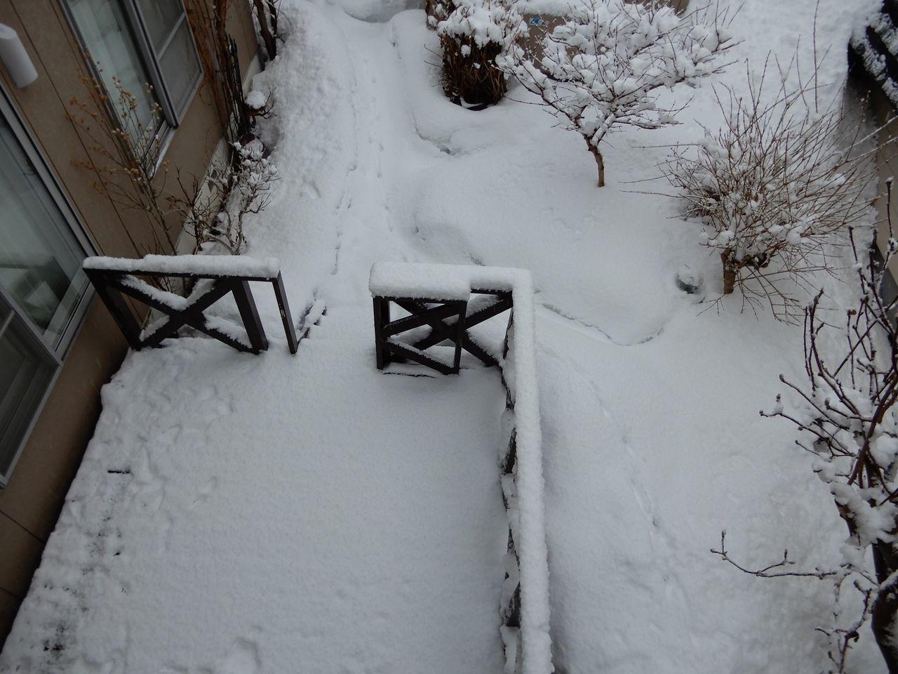 水よりも重い雪が積もりました_c0025115_22261878.jpg