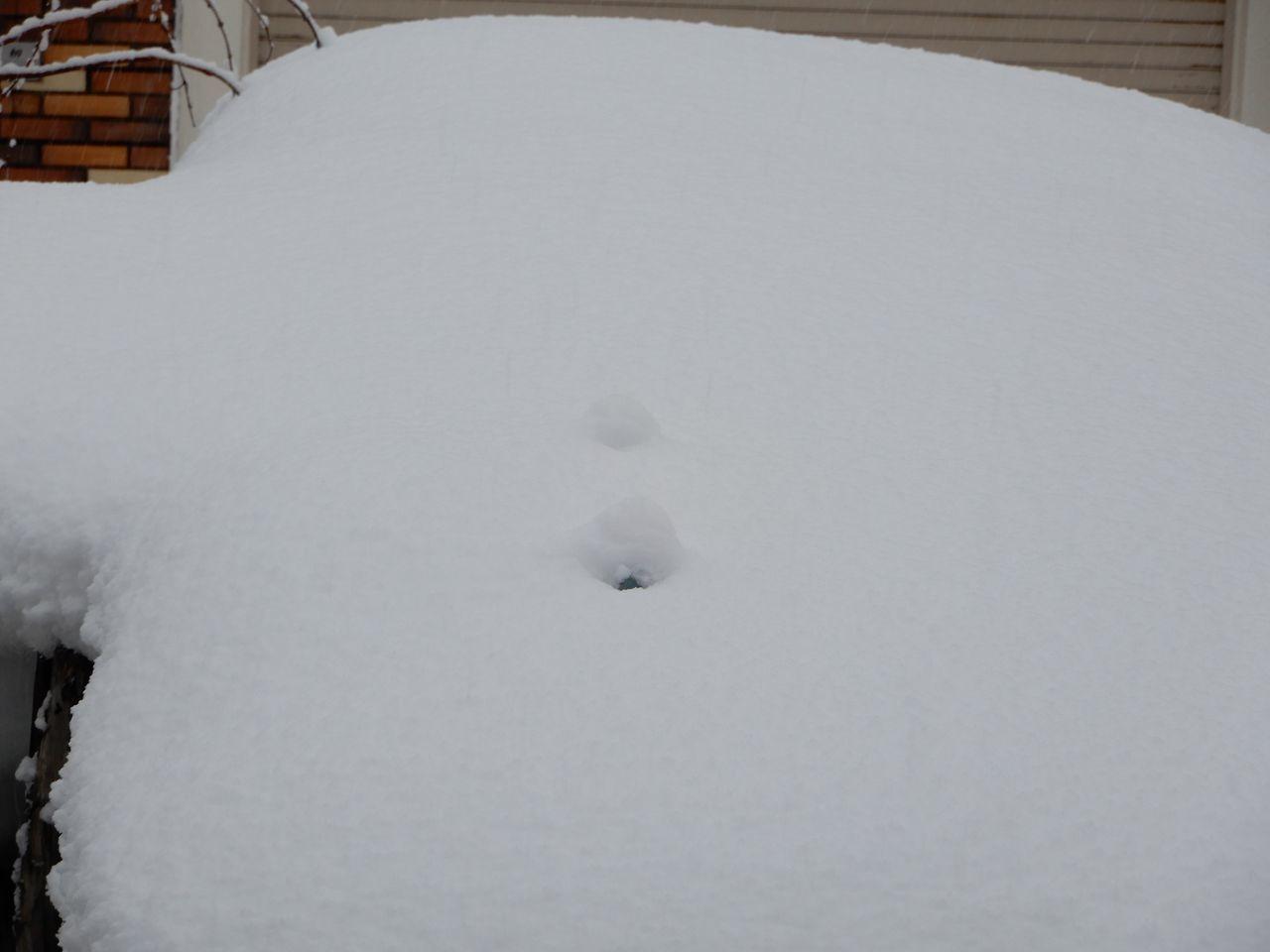 水よりも重い雪が積もりました_c0025115_22262133.jpg