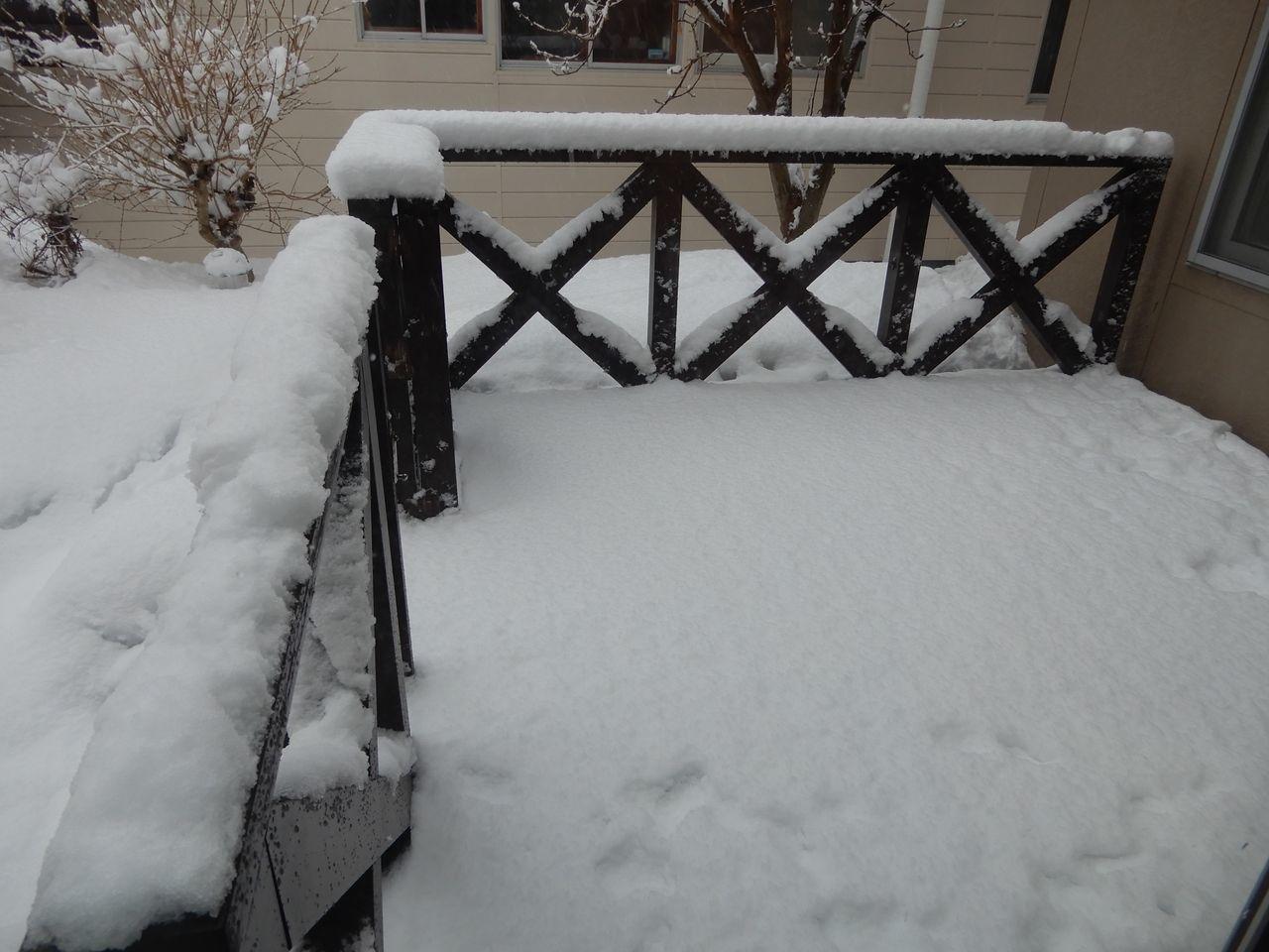 水よりも重い雪が積もりました_c0025115_22262490.jpg