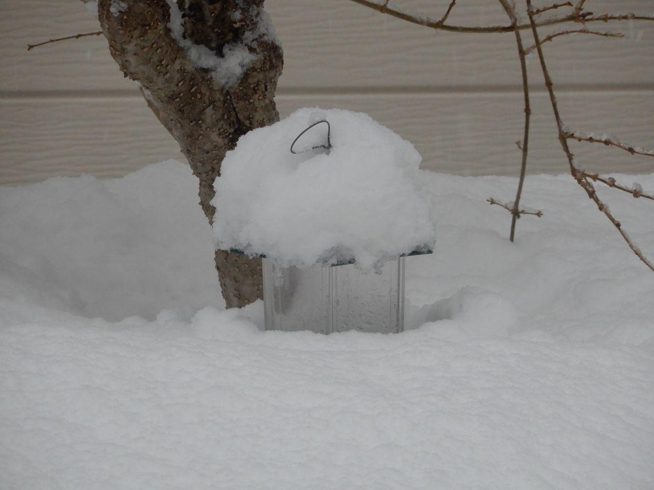 水よりも重い雪が積もりました_c0025115_22262967.jpg