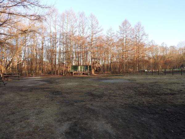 キャンプ場は休業中です(2020年3月5日)_b0174425_10362754.jpg