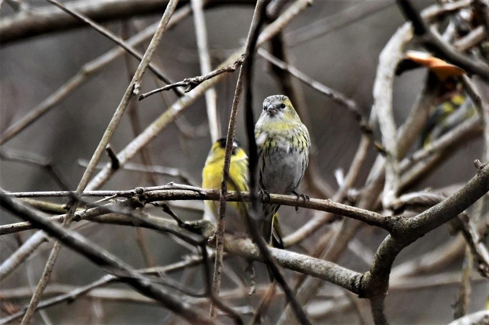 お山の鳥さん_b0405327_16561771.jpg