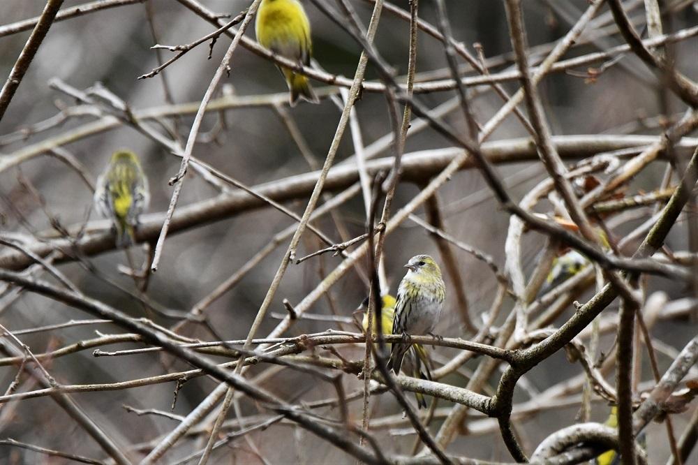 お山の鳥さん_b0405327_16563556.jpg