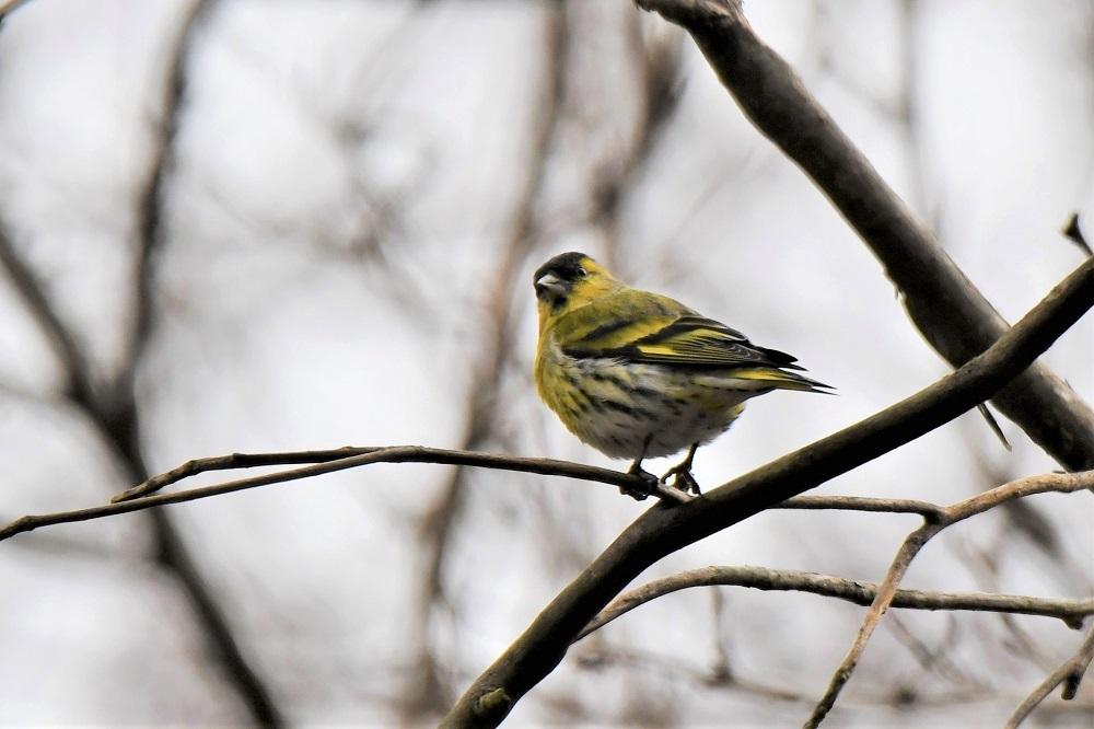 お山の鳥さん_b0405327_16574148.jpg