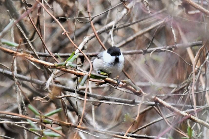 お山の鳥さん_b0405327_17004561.jpg