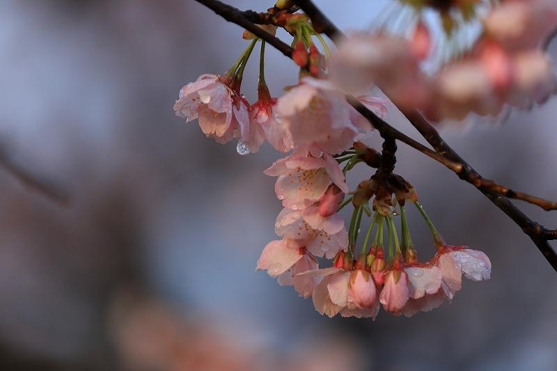 【西方寺】_f0348831_19022451.jpg