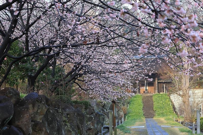 【西方寺】_f0348831_19035486.jpg