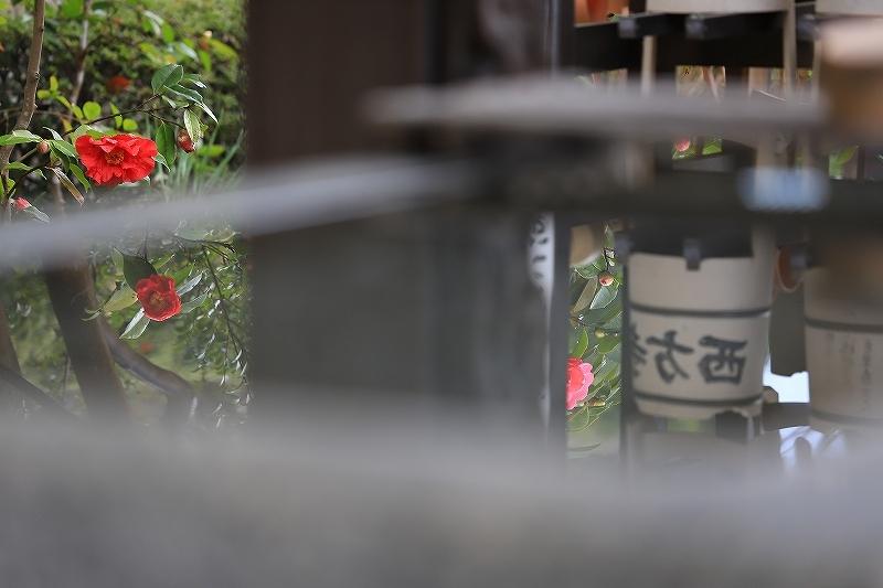 【西方寺】_f0348831_19040531.jpg