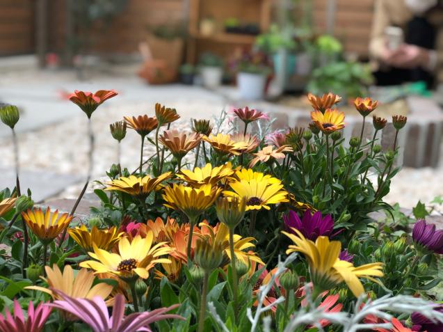 【啓蟄】お庭を自然で満たして_e0379544_15424425.jpg