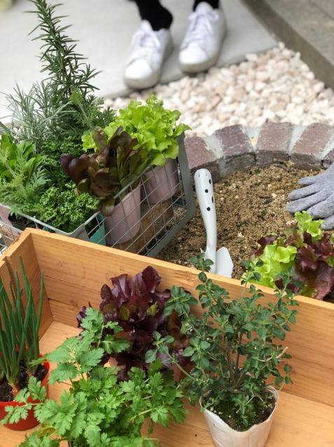 【啓蟄】お庭を自然で満たして_e0379544_15451537.jpg