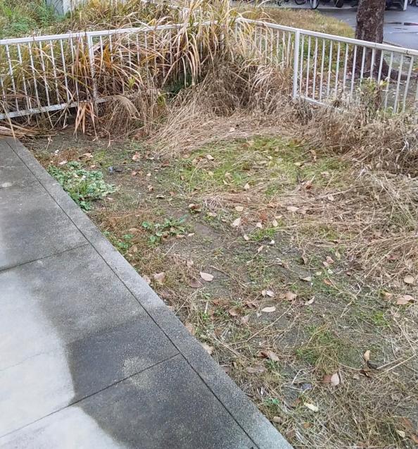 【啓蟄】お庭を自然で満たして_e0379544_15543386.jpg