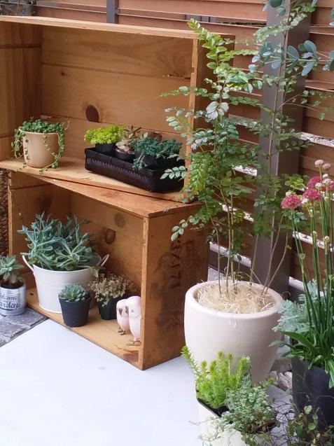 【啓蟄】お庭を自然で満たして_e0379544_16070618.jpg