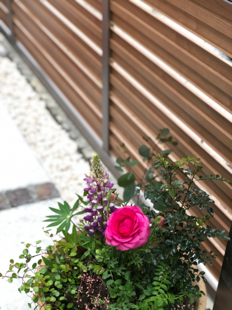 【啓蟄】お庭を自然で満たして_e0379544_16082936.jpg