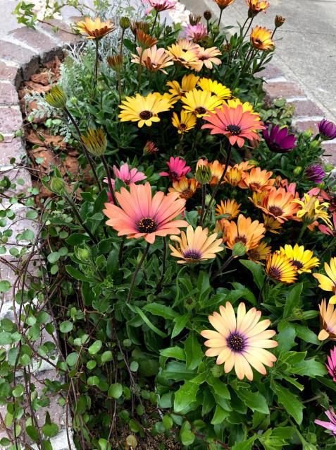 【啓蟄】お庭を自然で満たして_e0379544_16103888.jpg