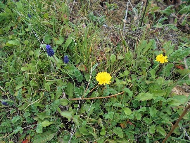 緑の草の中に春の色_d0153860_11145617.jpg