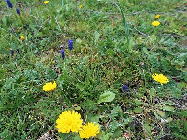 緑の草の中に春の色_d0153860_11151079.jpg
