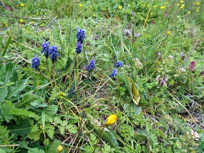 緑の草の中に春の色_d0153860_11155185.jpg